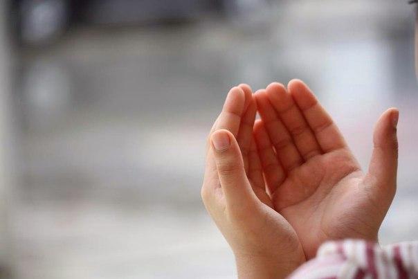 Agar doamu menembus langit