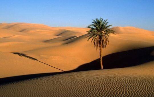Sebatang Pohon pun Rindu Kepada Nabi Shallallahu 'Alaihi wa Sallam
